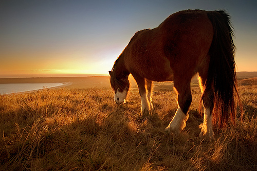 djur-field-horse-nature-vyer-favim-com-218369
